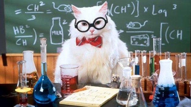 Science-Cat-cats-37352902-625-352
